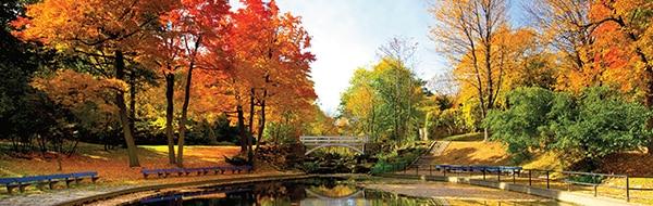 Fall trees in Québec, Canada